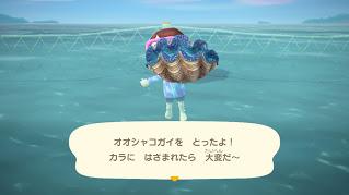 海の幸が採れる