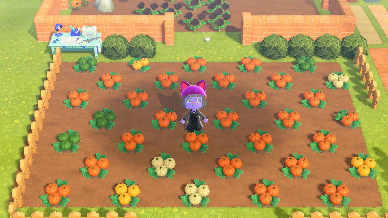 あつまれどうぶつの森の「かぼちゃ」が再収穫できるのは?